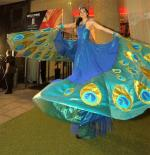 peacock stilt swirling